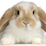 [MAJ] La fin des tests sur les animaux pour les cosmétiques en Europe : 11 mars 2013