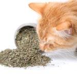 9 traitements naturels pour soulager l'arthrose chez vos animaux